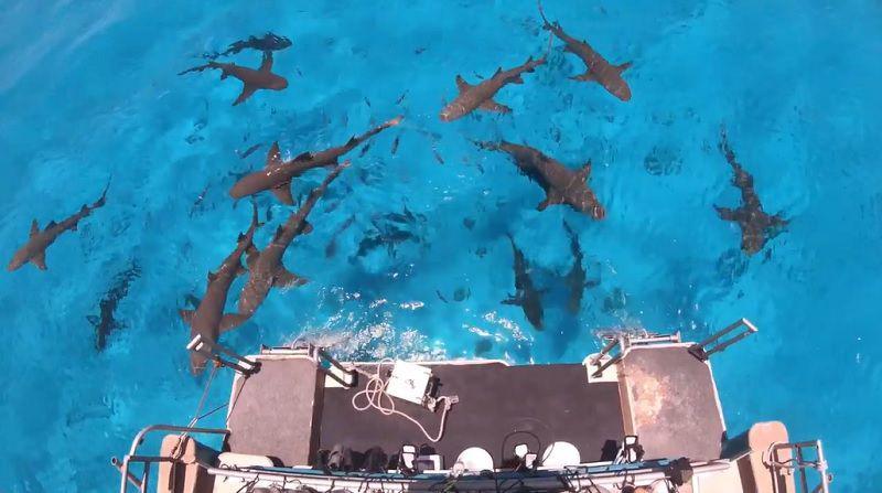 Shark-Wxperiment