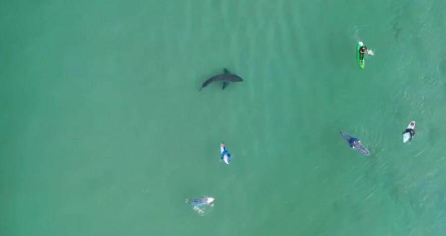 Shark-South-Africa