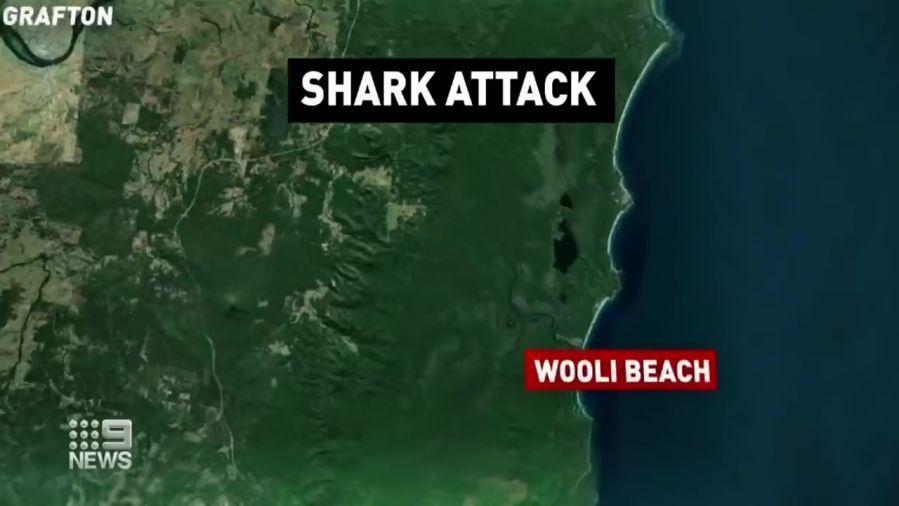 Shark-Attack-Wooli